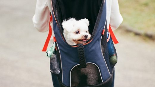 Dog Backpacks Sizing Table - Post Thumbnail