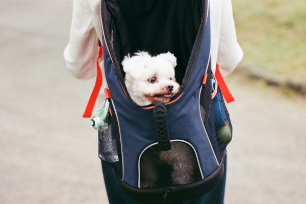 Dog Backpacks Sizing Table - Post Thumbnail